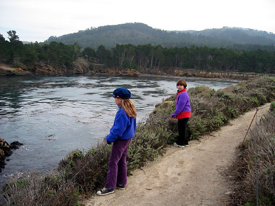 Point Lobos 12:31:0326