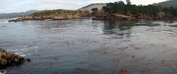Point Lobos 12:31:0302