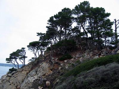 Point Lobos 12:31:0329