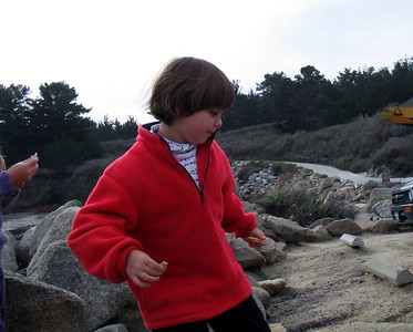 Point Lobos 12:31:0311