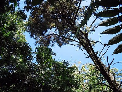 Coyote Creek Trails 07-04 9