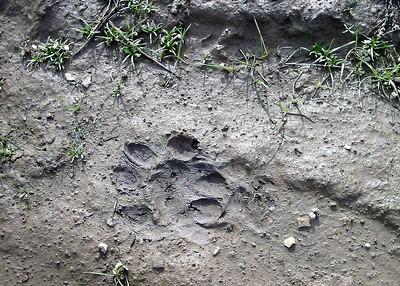 Cat Track 12:13:03 1