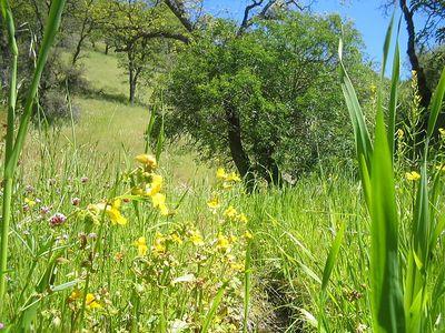 Coe Hike 4-20-2005 22