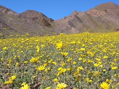 Death Valley - March 12, 2005