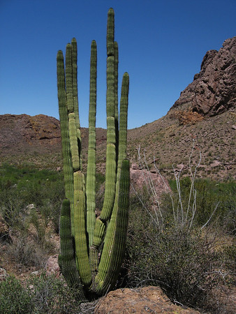 Organ Pipe Cactus National Monument, AZ - April 26, 2009