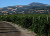 Trentadue Winery, Alexander Valley.  August 10, 2008
