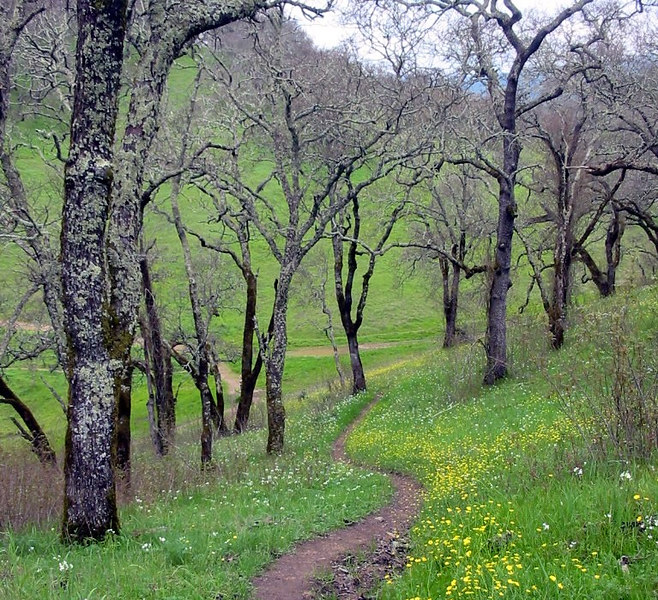 Sonoma Valley Regional Park.  February 26, 2005.