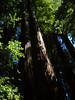 Hendy Woods State Park - June 26, 2011.