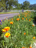 Vernon Nichols County Park, Guinda, CA.