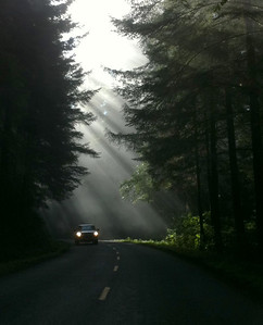 Redwoods-Lassen Trip - Sept. 13-15, 2012