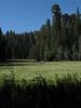 Crescent Meadow