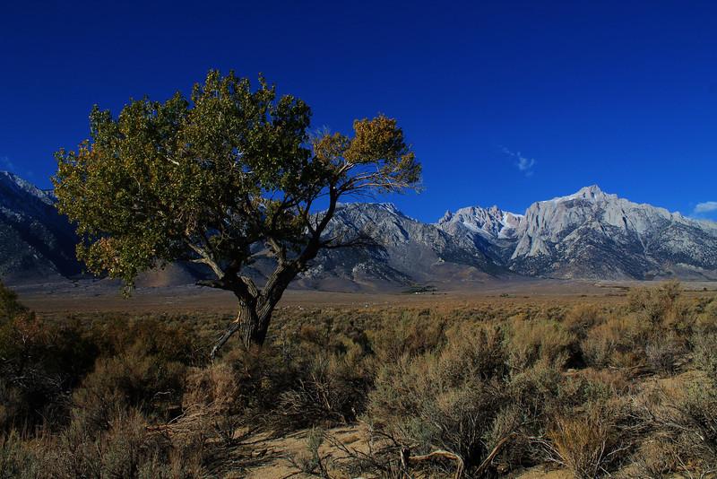 Near Lone Pine