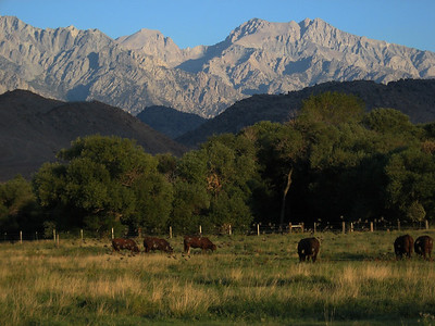 Eastern Sierra and Alabama Hills above ranch, Lone Pine