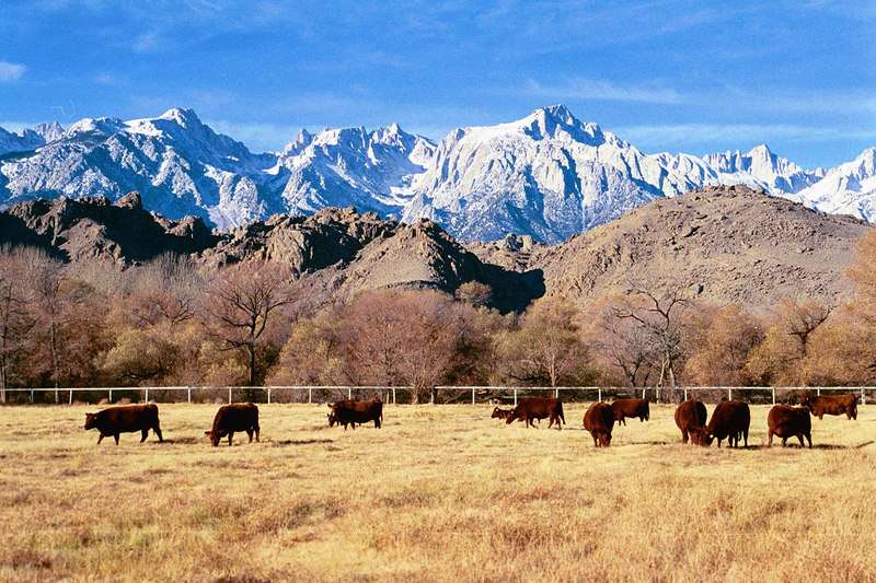 Eastern Sierras (including Mt. Whitney) and Alabama Hllls, from Lone Pine, CA.  December 25, 2001.