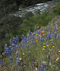 Hite Cove Trail - April 16, 2011