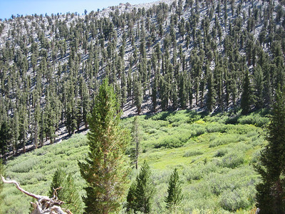 Cottonwood Pass 8-28-05
