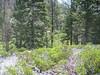 Along the Aspen Grove Trail