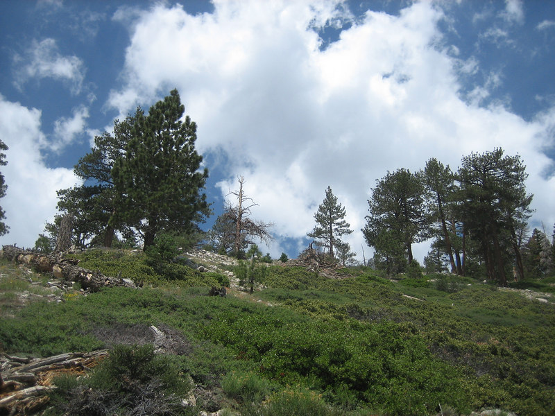 Looking westward along the Fish Creek Trail
