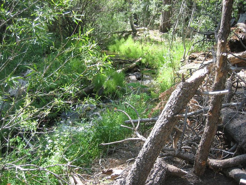 Fish Creek along the Aspen Grove Trail.