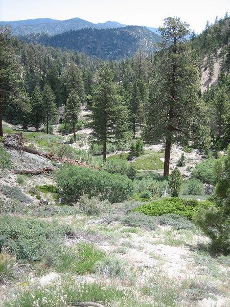 Looking eastward along the Fish Creek Trail.
