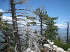 Trees blocking Mt. Baldy