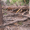 There were lots of downed trees on the Momyer trail and on the lower reaches of the trail to San Bernardino Peak(s).
