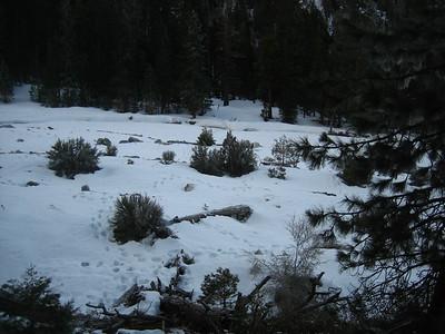 Vivian Creek 3-7-09