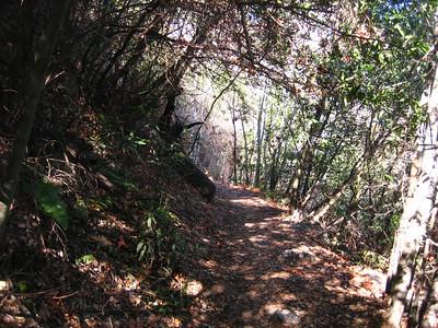 Mt Wilson Trail 1-16-10