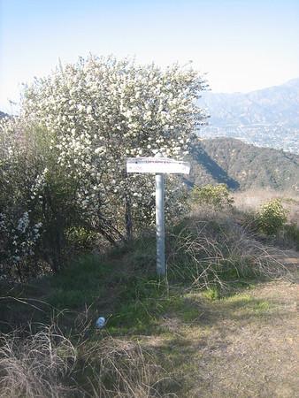 Viper Trail-Mt Verdugo 2-18-13