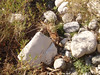 Matt Dickie photo of mountain lion at JPL (under East Lot bridge) 8:55 AM 1-16-08