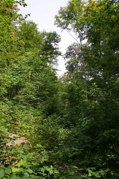 Batchawana Mountain 'Trail' -- 1,700'