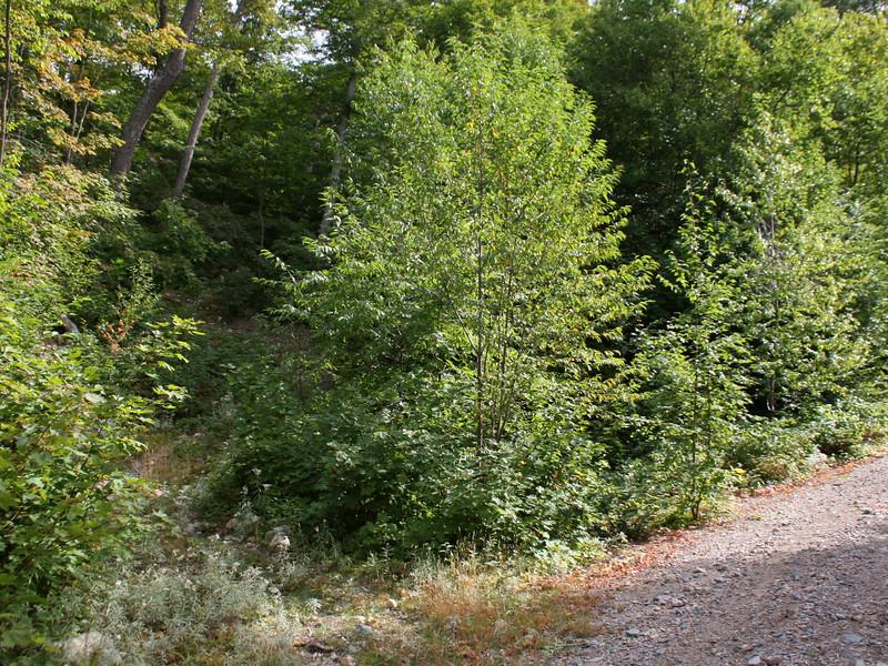 Batchawana Mountain 'Trail' -- 1,460'