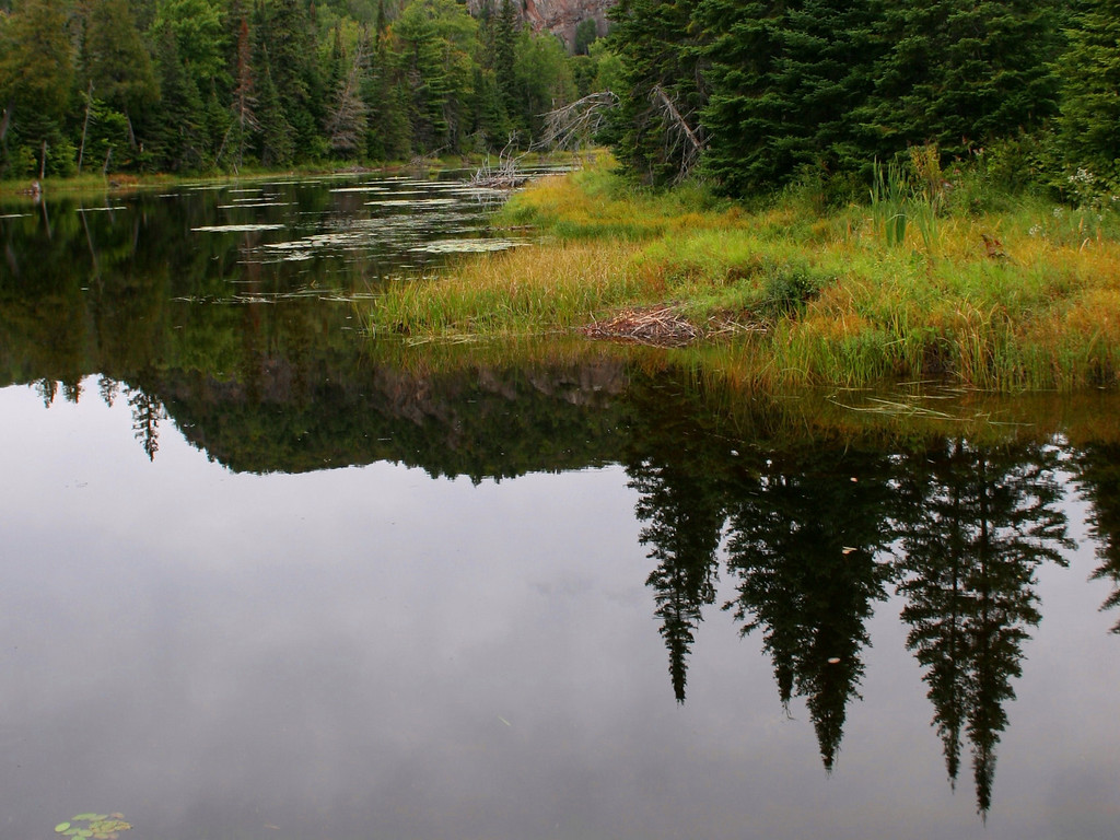 The still waters of a beaver pond reflect the surrounding forest alongside Mile 38 Road...