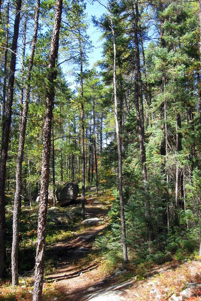 Cobre Lake Trail
