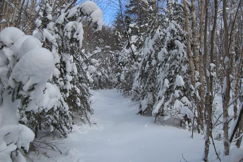 Griffin Lake Peak Trail -- 1,800'