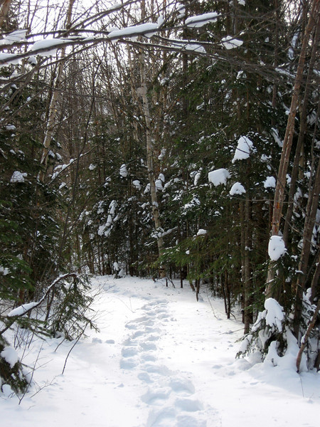 Griffin Lake Peak Trail -- 1,700'