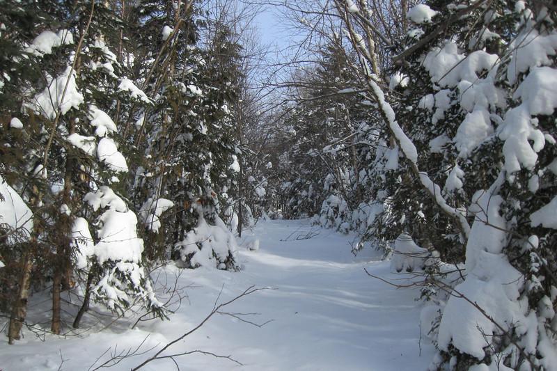 Griffin Lake Peak Trail -- 1,760'