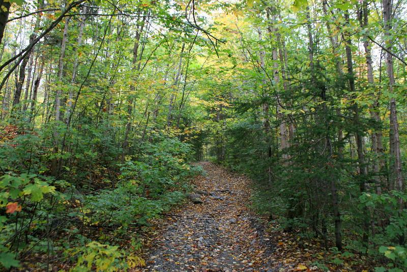 Griffin Lake Peak Trail -- 1,600'