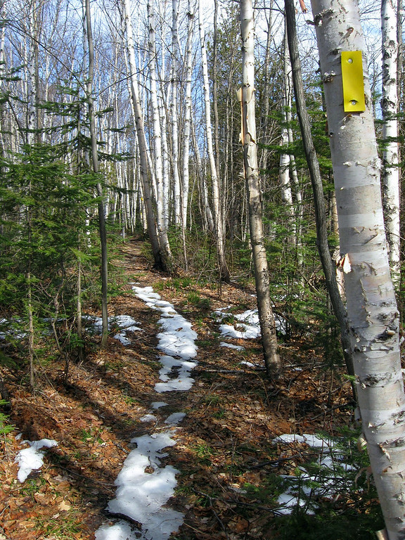 This was a particularly pretty spot as the trail passed through a young grove of Paper Birch...