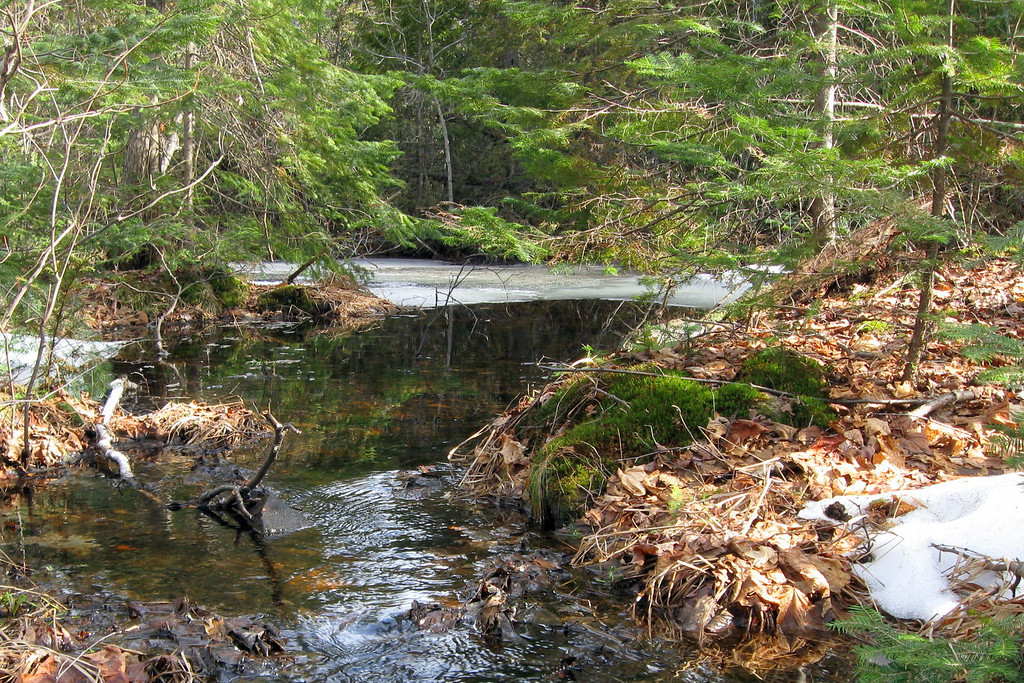Melt-water empties from a small pond beneath the Firs...