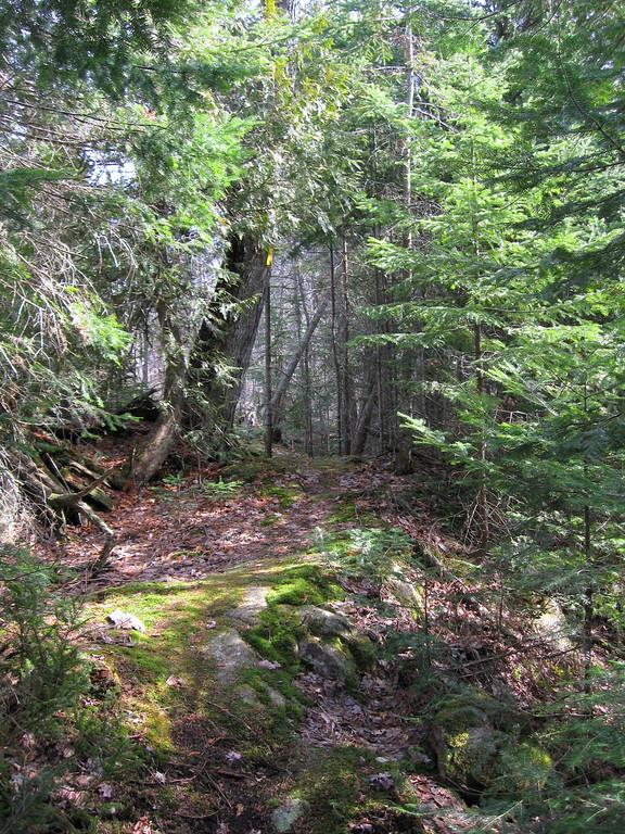 A rather creepy-looking little cedar portal...