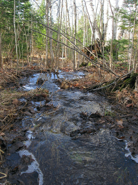 The low-point along the crest was collecting all the melt-water from the woods above creating this pretty, seasonal stream...