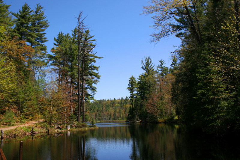 Our first stop was Kinsman Park.  We walked to the south of this pond to reach the first falls...