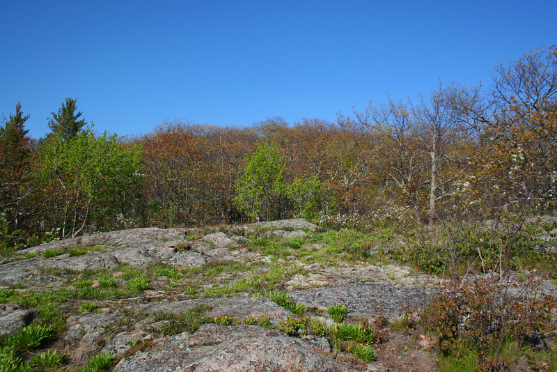 The lay of the land atop Gros Cap...near the edge only small shrubs and moss manage to survive...