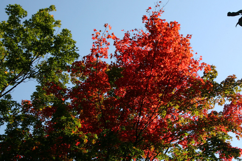 Signs of fall in the treetops, even though it didn't feel like autumn with temps nearing 80...