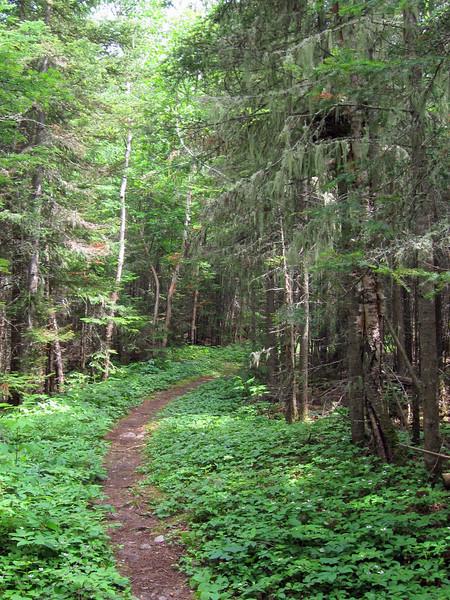 Nokomis Trail