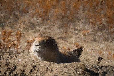 """Painterly"" - Stylized Prairie Dog"
