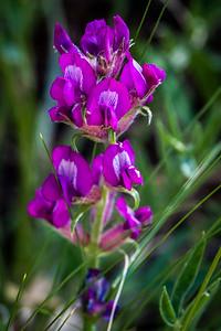 Colorado Loco Flower