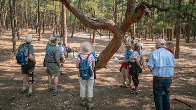 Hike-PrayerTrees8-16-18-06503