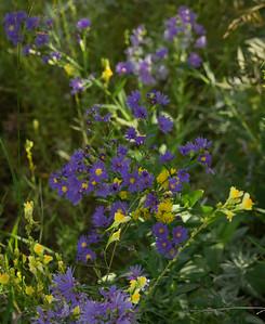 Monument Rock-Flower-03788